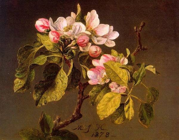 Apple Blossoms CGF